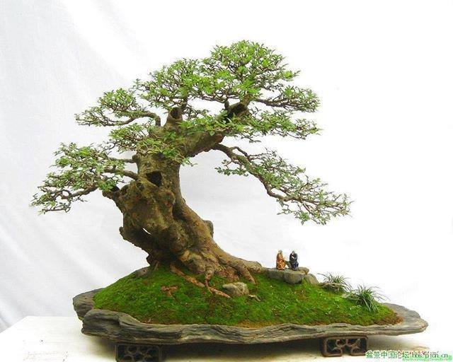 spring-bonsai-on-rock_kuanghua-hsiao