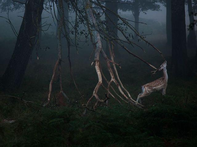 deer-dawn-richmond-park-london_szymon-bakota