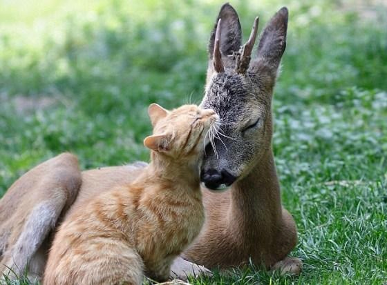 deer-w-kitty