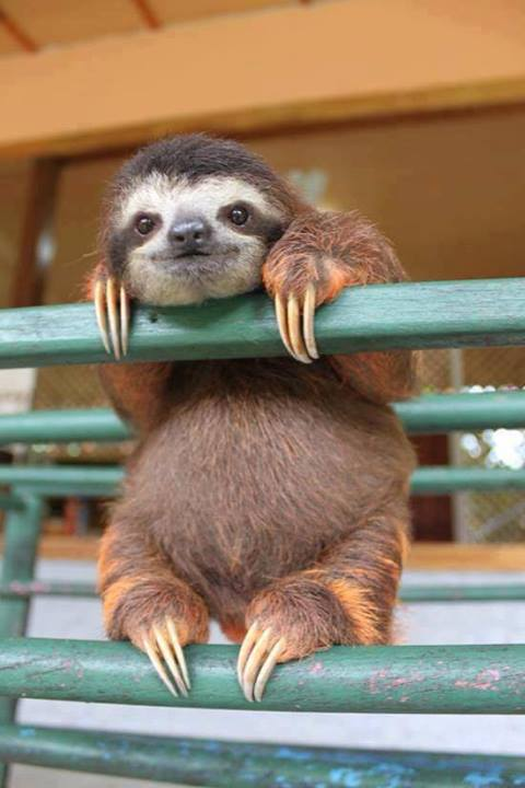 sloth-on-railings
