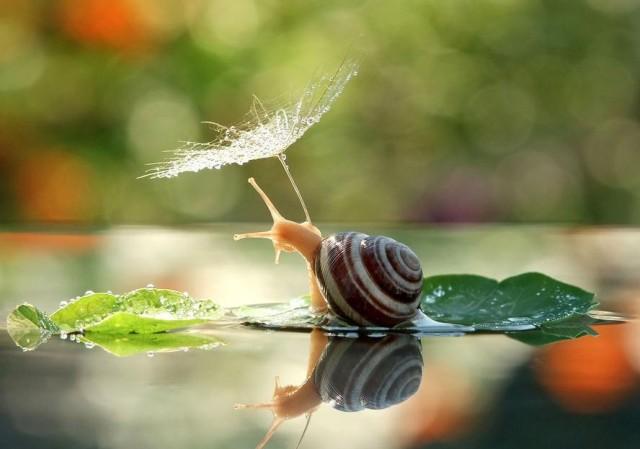 snails-vyacheslav-mishchenko