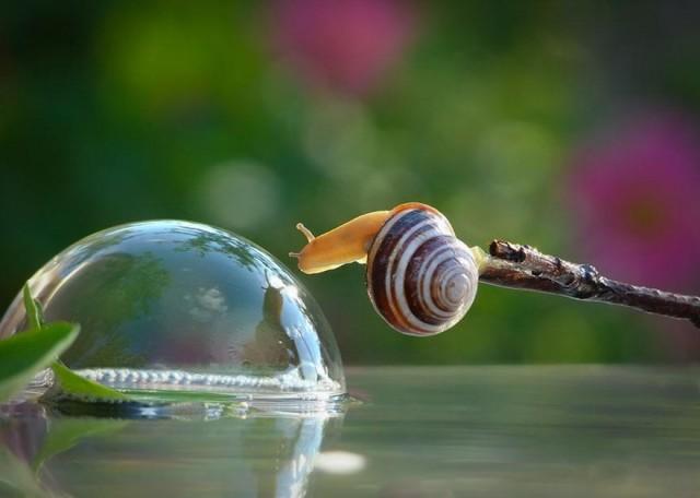 snails1-vyacheslav-mishchenko