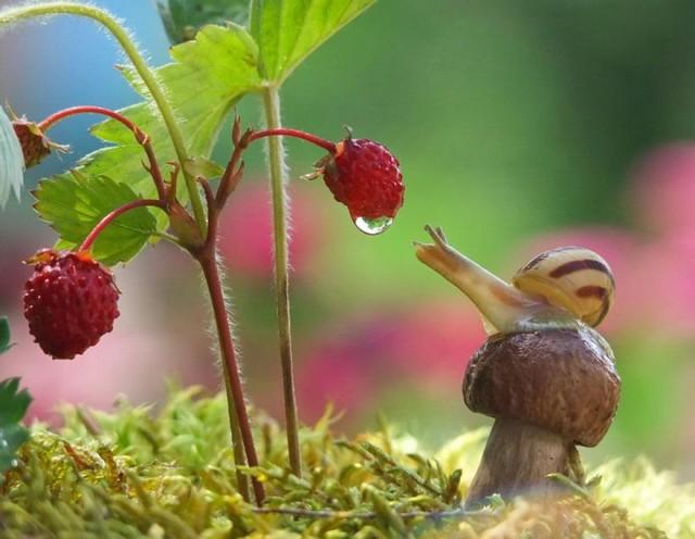 snails2-vyacheslav-mishchenko