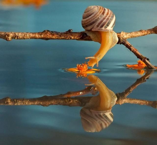 snails3-vyacheslav-mishchenko