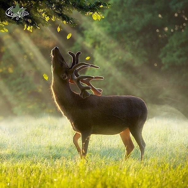 deer-tree_max-ellis