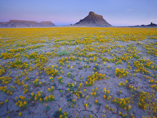 desert-blooms2-colorado-plateau-guy-tal
