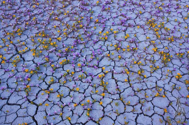 desert-blooms4-colorado-plateau-guy-tal