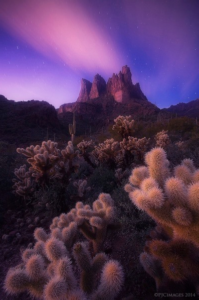 desert-dreams-peter-coskun