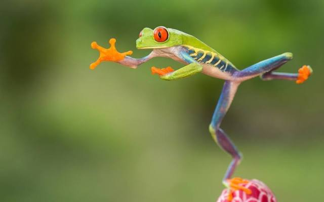 leap-day-leapfrog